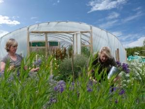 cutting garden polytunnel